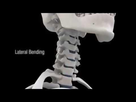 En el diagnóstico del dolor de espalda