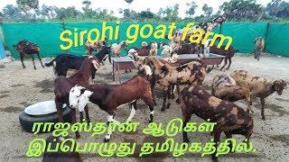 goat farming tamilnadu tamil - TH-Clip