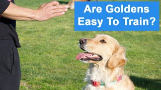 Are Golden Retrievers Easy To Train? (The Truth About Training Goldens)