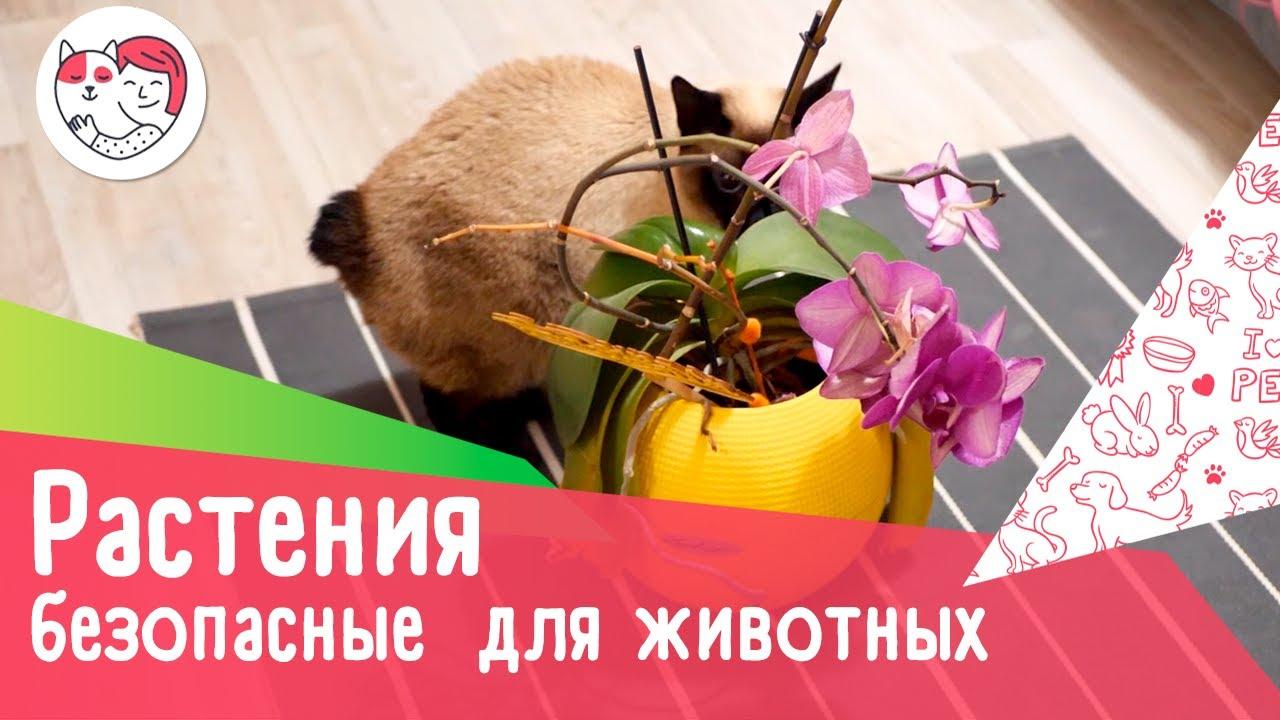 7 безопасных для домашних животных комнатных растений