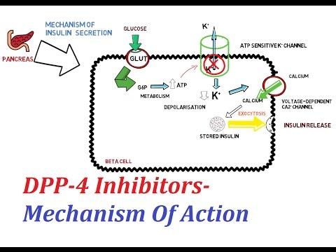 DPP-4 Inhibitors - Mechanism Of Action