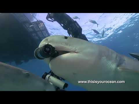 If A Shark Ever Tries To Eat You, Just Feed It Your Expensive Underwater Camera Rig Instead