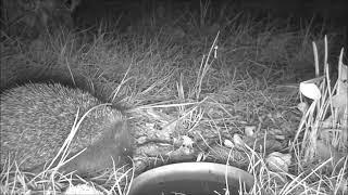 Wildlife Trail Camera - 10.9.2019