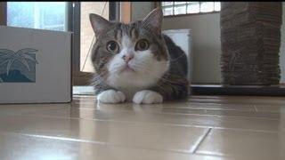 Кот Мару празднует свой 6-ой день рождения