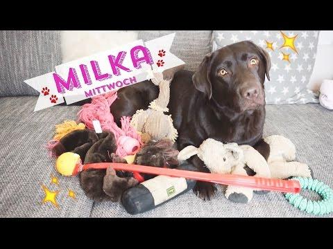♡ Milka Mittwoch ♡ Spielzeug | Haustier Tag | Haul | Hund Labrador | Welpe | Schokolabbi kong dummy