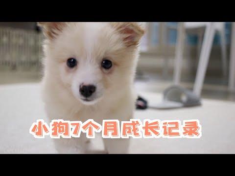小狗被领养后7个月的成长记录|一起被治愈