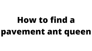 How to find a pavement ant queen