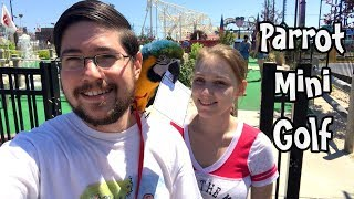 Rachel Blue and Gold Macaw Plays Mini Golf