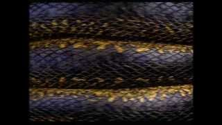 Anaconda Trailer Image