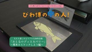 【びわ博の中の人】学芸員さんが標本のスケッチ方法を大公開!