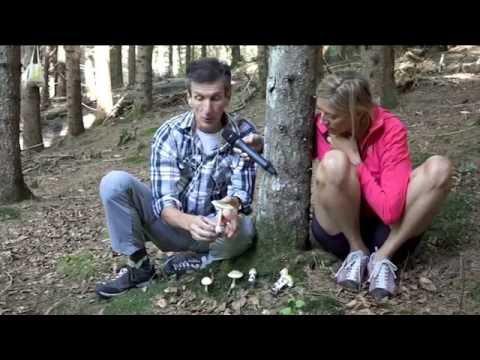 Trattamento di zozh di un fungo di unghie
