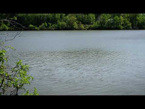 A big attraction for this state park is its access to the Yadkin/Pee Dee River.