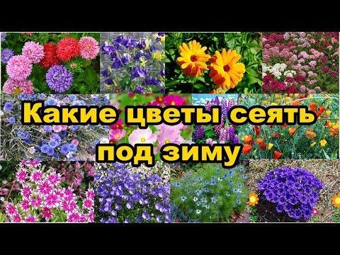 Какие цветы сеять под зиму?