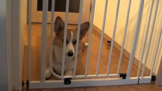 ゲートを押して来るレガロ