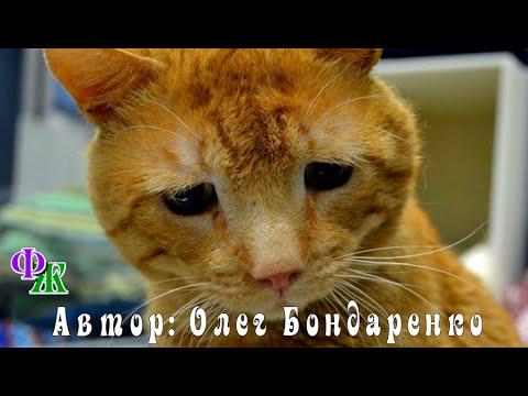 «У нас нет денег на лечение! После обеда его на укол!» - сказал врач приюта и указал на рыжего КОТА