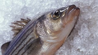 Antifreeze proteins prevent fish from freezing