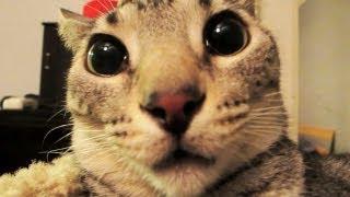 Уникално Смешни котки!!! Вижте ги!!!