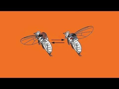 Modern gyógymódok az emberi paraziták számára