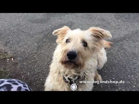 Red Dingo Namensschild für Hunde Kompass dogandshop.de