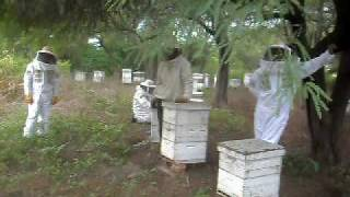 preview picture of video 'apicultura, coop. apícola de Santa Silvina'