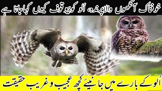 Owl the symbol of wisdom or foolishness |Amazing facts about Owl | Birds facts | Animal world