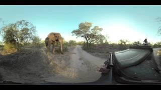Naughty Elephant