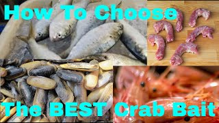 What is The Best Blue Crab Bait?  - Dock Side Chat With A Bait Expert // David Bishel