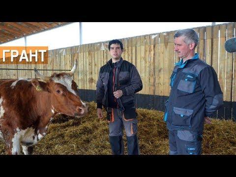 Фермеры Андрей и Дмитрий Коломиец. О получении гранта на строительство фермы и дотациях на молоко