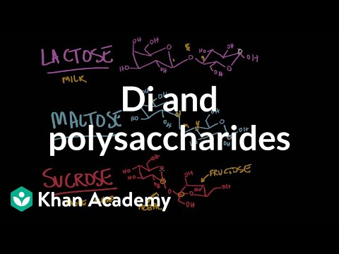 Carbohydrates- di and polysaccharides (video) | Khan Academy