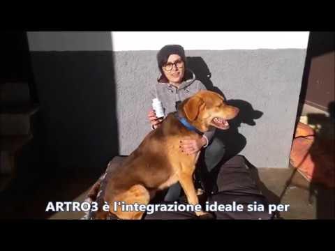 Barnaul recensioni artroplastica