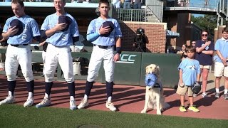 A dog in the dugout at UNC Baseball