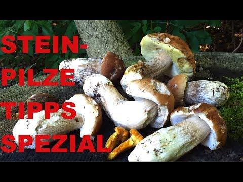 STEINPILZE wo suchen, wie finden 🍄 Pilze SPEZIAL 🍄