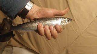 Увильды рыбалка форум отчеты