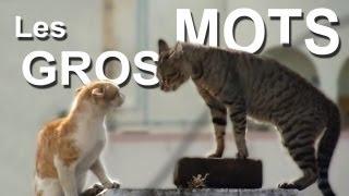 LES GROS MOTS - PAROLE DE CHAT