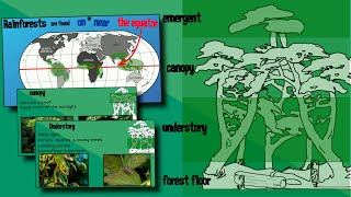 Layers of a Rainforest | EasyTeaching
