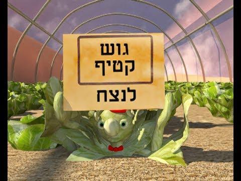 חסלט - ירק גוש קטיף