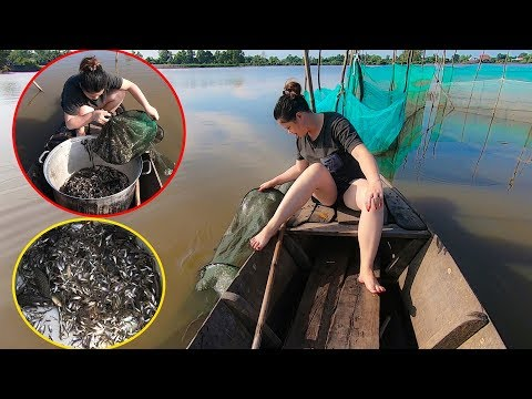 Cùng xem em gái miền Tây đi thuyền đổ Dớn bắt cá đồng khủng mùa nước nổi Miền Tây
