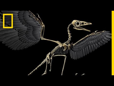 How Birds Evolved from the Dinosaurs of Old
