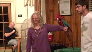 Santina Green-Winged Macaw at the Parrot Club of Connecticut - YouTube