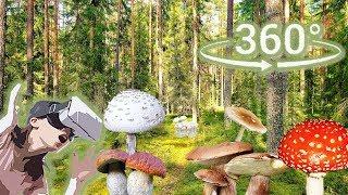 Панорамное Видео 360 VR 4K для очков виртуальной реальности.Собираю грибы. Samsung gear 360