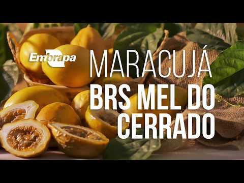 Maracujá BRS Mel do Cerrado