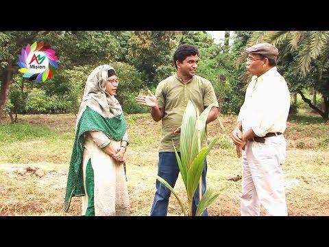 খাটো জাতের নারিকেলের চারা রোপন ও পরির্চযা | Khato Jater Narikel | Dewan Siraj | Mati O Manush