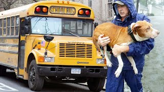 Truck Driver Turns Bus Into A Mobile Animal Shelter To Rescue Dogs And Cats