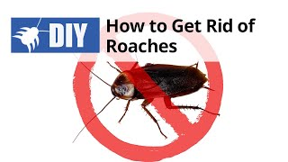 How to Get Rid of Roaches Yourself | DoMyOwn.com