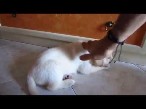 Cuccioli di Labrador - prima uscita