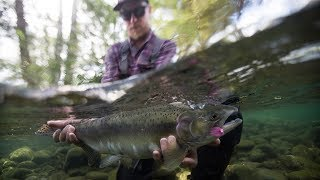 Fishing BC and Hooké Present: Exploring Vancouver Island Streams with Cumberland Fly Shop