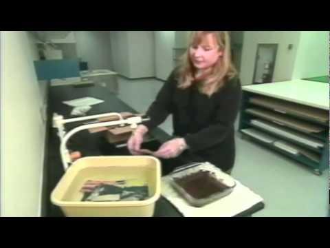 Le traitement du psoriasis par la racine de linule