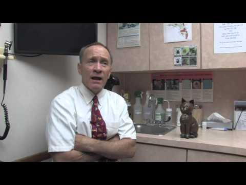 Video How to Treat Urinary Tract Infections in Cats