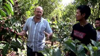 Coffee Trails - Bali