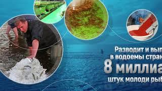 Главное бассейновое управление по рыболовству и сохранению